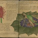 The Personal Journal of Dana P. Pellington - Milloper Flower